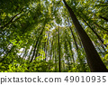 Green Trees Top in Forest 49010935
