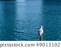 นกนางนวลโอไดบะญี่ปุ่น 49013102