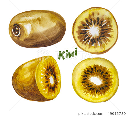 Kiwi fruit painting.Painted with watercolor. 49013780