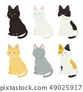다양한 고양이 49025917