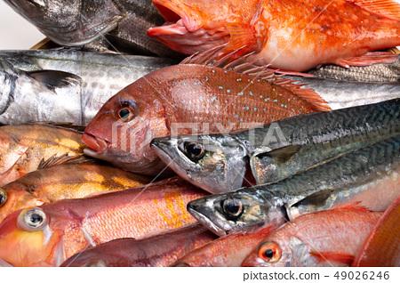 各種魚 49026246