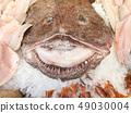 Monkfish and fresh fish close up 49030004