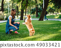 Portrait of woman with dog Welsh Corgi Pembroke in dog park 49033421