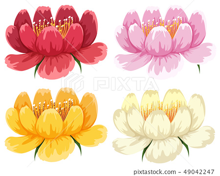 Four colors of the same type of flower 49042247