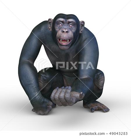 一隻猴子 49043283