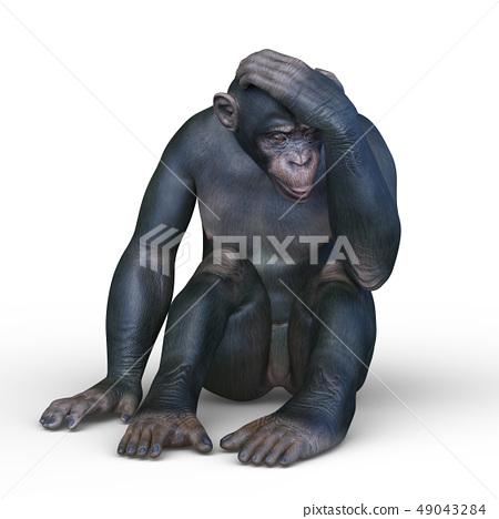 一隻猴子 49043284