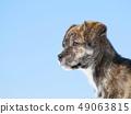 강아지 49063815