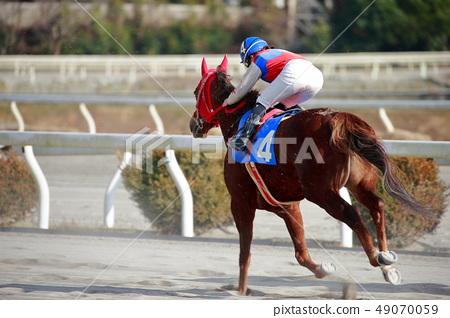 Horse race 49070059