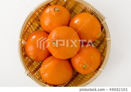 Mineola Orange 49082101