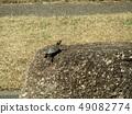 เต่าในบ่อน้ำของ Inage Park 49082774
