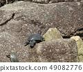 ผู้ปกครองเต่าและเด็กในบ่อน้ำของอุทยานชายหาด Inage 49082776