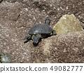 เต่าในบ่อน้ำของ Inage Park 49082777