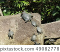 ผู้ปกครองเต่าและเด็กในบ่อน้ำของอุทยานชายหาด Inage 49082778