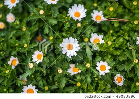 꽃 49083896