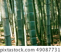 Closeup of the bamboo alley 49087731