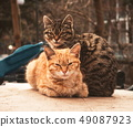 Portrat of the two cute cats 49087923
