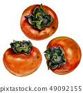 Watercolor Persimmons Set 49092155