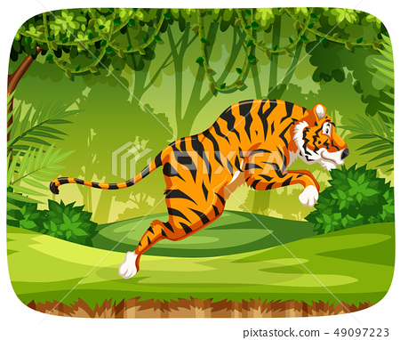A tiger jumping in forest 49097223