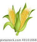 Ears of corn 49101668