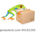 Delivery tree frog 49102265