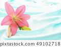 깨끗한 백합 꽃 49102718