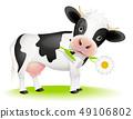 Little cow eating daisy 49106802