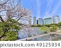 하마 리큐 은사 정원의 汐入 연못과 벚꽃에 고층 빌딩 49125934