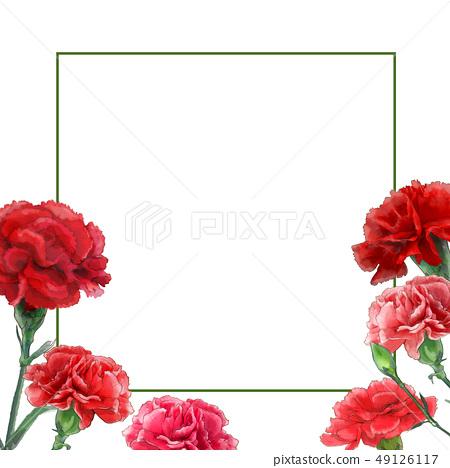 康乃馨花框架。 49126117