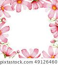 波斯菊花框架。 49126460