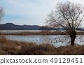 겨울강가의 나무와 갈대밭 49129451
