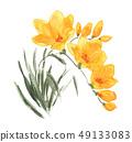 花朵 花 花卉 49133083