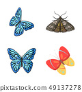Vector design of color and spring icon. Set of color and fly vector icon for stock. 49137278