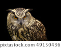 Image of an owl on black background. Birds. 49150436