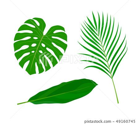 Tropical Leaves Illustration Set Stock Illustration 49160745 Pixta Find over 100+ of the best free tropical leaves images. https www pixtastock com illustration 49160745