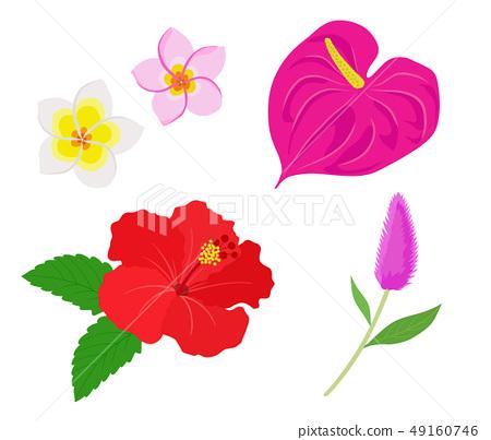 熱帶花卉插圖集 49160746