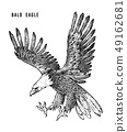 Bald eagle. Wild forest bird of prey. Hand drawn sketch graphic style. Fashion patch. Print for t 49162681