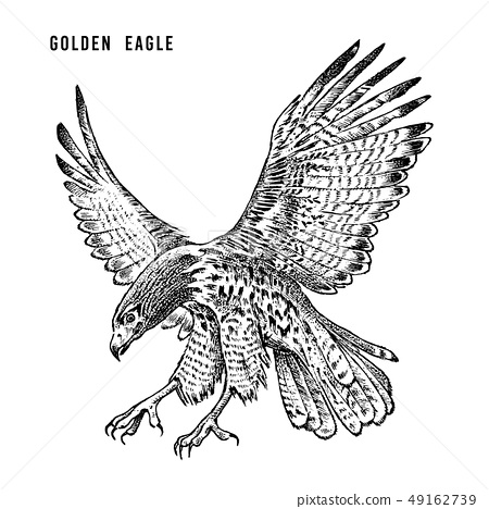 Golden eagle. Wild forest bird of prey. Hand drawn sketch graphic style. Fashion patch. Print for t 49162739