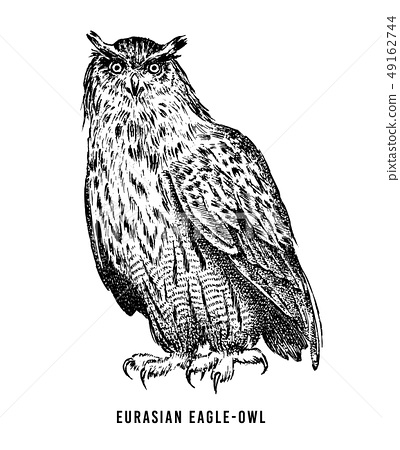 Eurasian eagle owl. Wild forest bird of prey. Hand drawn sketch graphic style. Fashion patch. Print 49162744