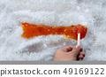 Maple Taffy 49169122