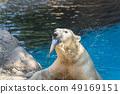 물고기를 입에 무는 북극곰 49169151