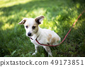 young white dog 49173851
