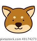Shiba Inu 49174273