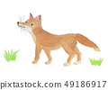 fox / watercolor 49186917