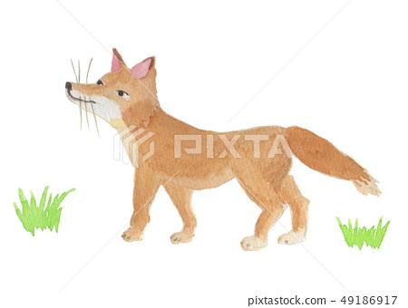 fox / watercolor 49186917