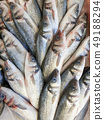 Sea bass fish on ice for sale 49188294