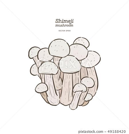 Hand drawing a gourmet mushroom Shimeji. 49188420