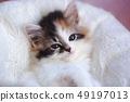 一只小猫 49197013