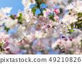 Blossom cherry tree branch. Blurred background. 49210826