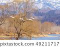 天鹅从雪山三月飞过 49211717