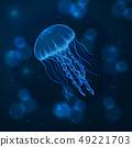 Hand drawn sketch isolated jellyfish, marine animals 49221703